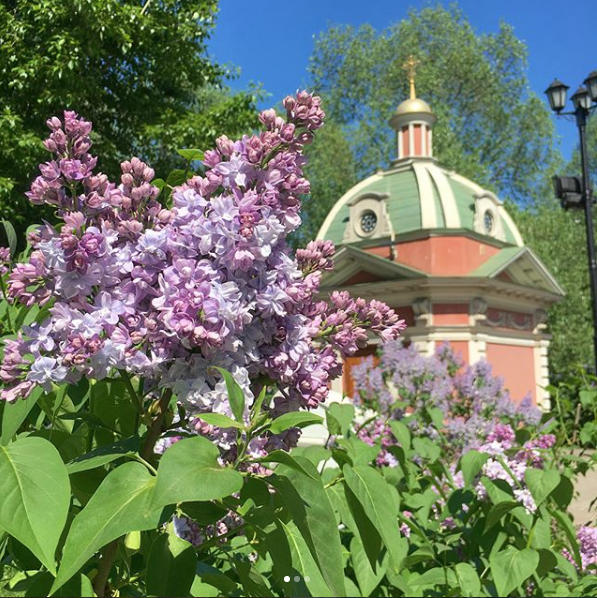 Скриншот instagram.com/vera_osinovskaya/?hl=ru.