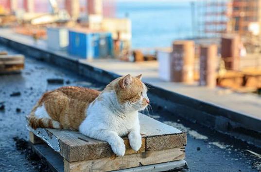 Кот Мостик на Крымском мосту. Фото www.instagram.com/cat_the_most