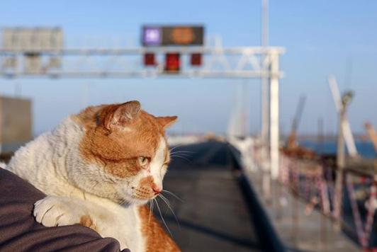 Кот Мостик на Керченском мосту. Фото www.instagram.com/cat_the_most