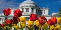 Тюльпаны на Елагином расскажут о русском балете: фото