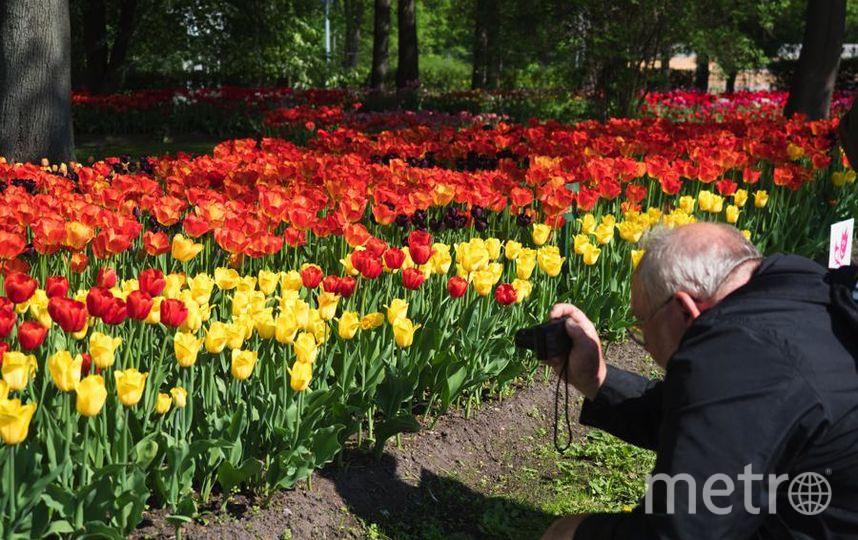 """Фестиваль тюльпанов на Елагином. Фото Святослав Акимов, """"Metro"""""""