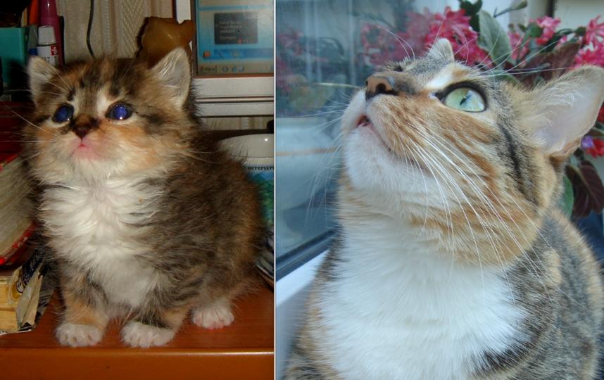 На фото - кошка Бусинка, наша любимая котейка. Здесь ей месяц от роду, когда ее подобрали во дворе, и три года, когда из маленького заморыша она уже превратилась в роскошного зверя. Фото Галина
