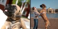 Котята и коты, щенки и собаки: Как меняются домашние питомцы (фото)