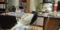 В офисах в Петербурге живут коты, хомячки и игуаны