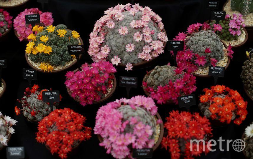 Chelsea Flower Show 2018. Фото AFP