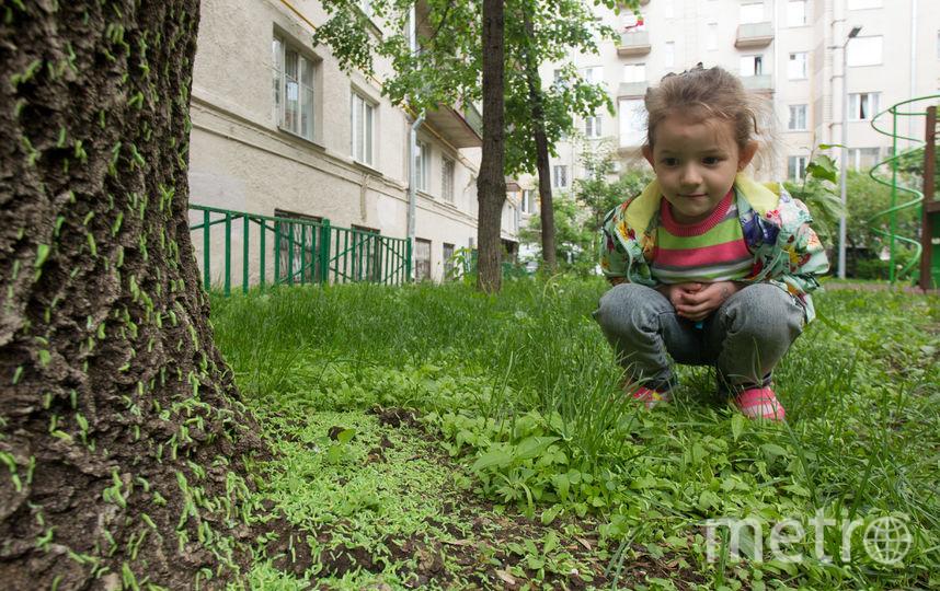 """Если в вашем дворе тоже обнаружилось скопление таких ложногусениц, напишите автору – darya.buyanova@gazetametro.ru. Фото Василий Кузьмичёнок, """"Metro"""""""