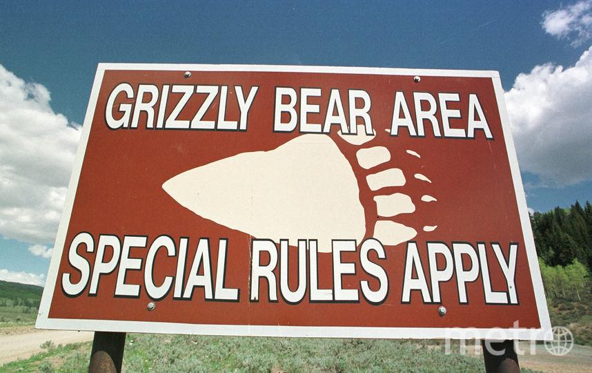 Зона обитания медведей гризли. Фото Getty