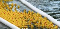 В Москве прошёл благотворительный утиный заплыв