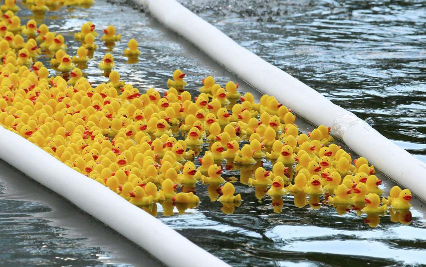 Заплыв резиновых уточек. Фото Василий Кузьмичёнок