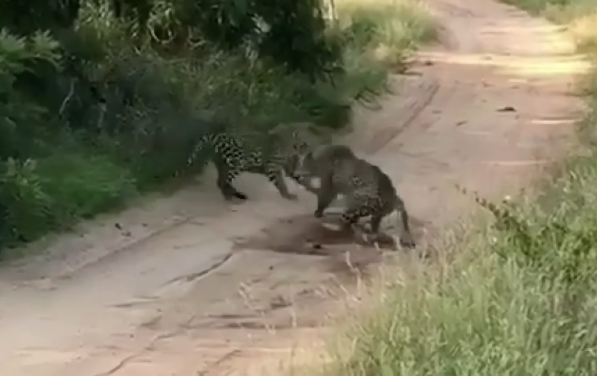 Скриншот из видео. Фото  Wildlife Sightings, Скриншот Youtube