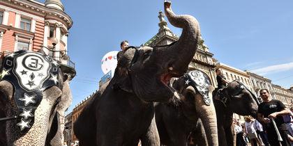 По улицам слона водили: в Петербурге прошел зрелищный парад
