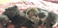 В приморском зоопарке кошка воспитывает детёныша рыси