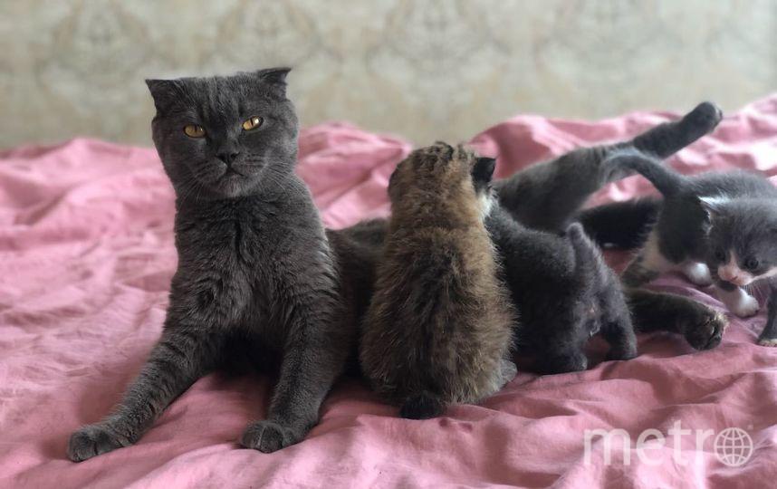 """Кошка Моника с детишками. Фото Предоставлено пресс-службой зоопарка """"Чудесный"""""""
