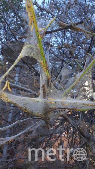 Гусеницы атакуют. Фото Мария Серенко vk.com/unreleased_dtp