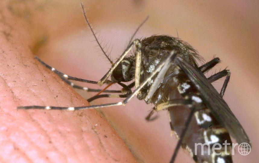 Переносчик заболевания – комары. Фото Getty