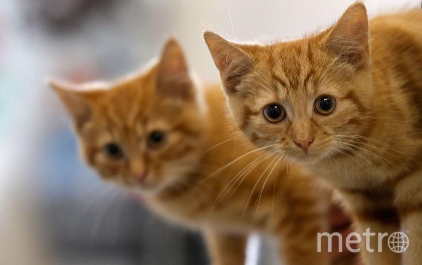 Кот сдал приставам своего хозяина-должника. Фото Getty