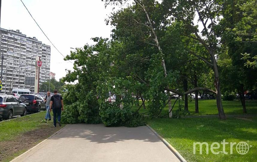 Деревья в результате сильного ветра в Москве 30 мая. Фото Василий Кузьмичёнок
