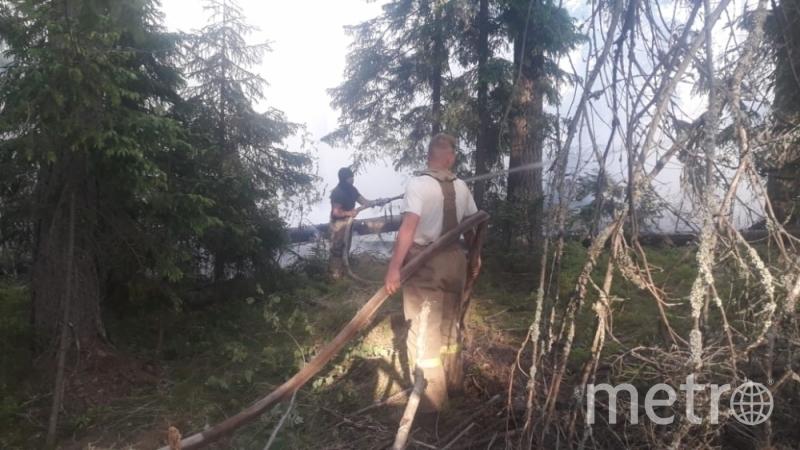 Лесные пожары тушат в Ленобласти. Фото МЧС Ленобласти.
