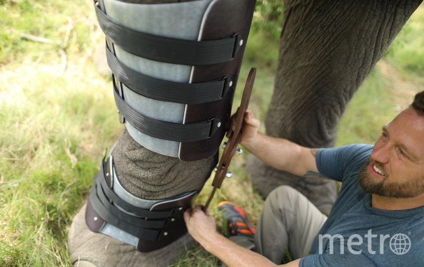 Детально рассмотреть, как Деррик создаёт протез для Джабу, а также познакомиться с другими удивительными людьми, посвятившими свою жизнь помощи животным, можно в рамках нового проекта «Герои среди нас», который стартует 9 июня на канале Animal Planet. Фото Предоставлено Animal Planet