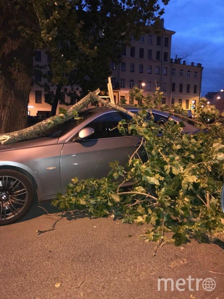 Ветер в Петербурге ломал ветки и рушил стволы деревьев. Фото https://vk.com/spb_today, vk.com