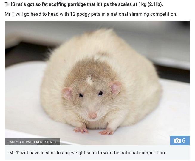 Мышонок Мистер Т весит 1 кг. Фото Скриншот: www.thesun.co.uk