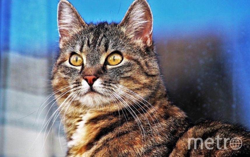 В Петербурге введут обязательные электронные документы на животных. Фото Pixabay.com