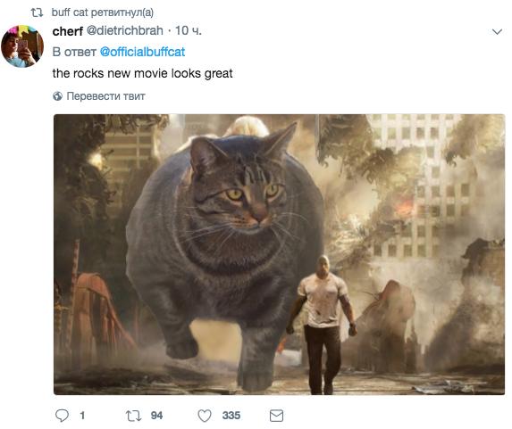 Скриншот twitter.com/officialbuffcat.