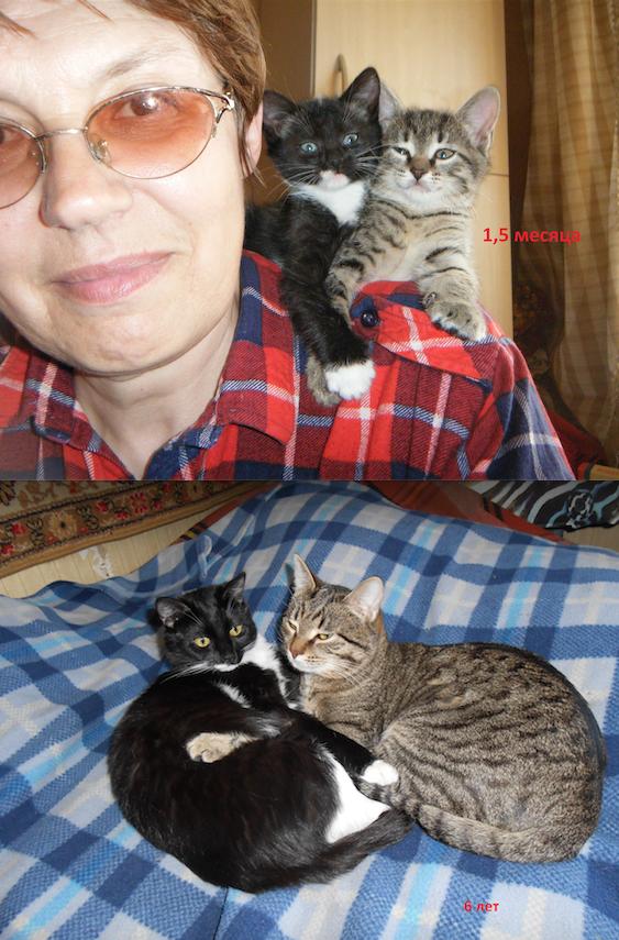 Это наши питомцы и любимцы - Тиграш и Кася. Они - брат и сестра, вместе с первого дня жизни. Дружные, игривые, ласковые. На первом снимке им по 1,5 месяца, на втором - по 6 лет. Любят спать в обнимку и нализывать друг друга. Фото Ирина Рыжова