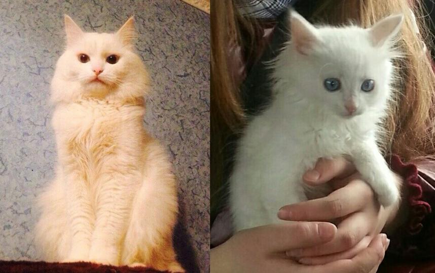 Мой старший сын пять лет назад в день кошек, 1 марта подарил нам с дочкой котенка. Ему было чуть больше месяца. Родился он в конце января 2013 года. Долго не могли подобрать ему имя, и решили, что Каспер подходит коту больше всего. С тех пор он стал любимцем всей семьи. Все заботятся о Касике (так мы его называем в домашней обстановке), как о младшем ребёнке. На снимках маленькому Касперу 2 месяца, а большому 5 лет. Фото Серган Анжела