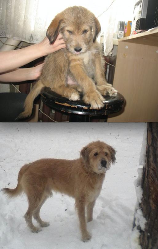 Это Тоша! Его Отдали хорошие знакомые! На первой фотографии ему 3 месяца, на второй возраст 9 лет. А еще он большой добрый и любимец семьи! Фото Василий
