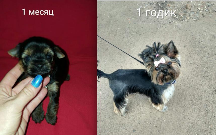 Это наша Джесси! Она приехала к нам из Белоруссии.Теперь она наш член семьи и большая любимица!! Фото Виктория