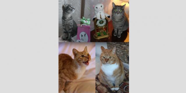 Кот Алексей и кошка Зося.