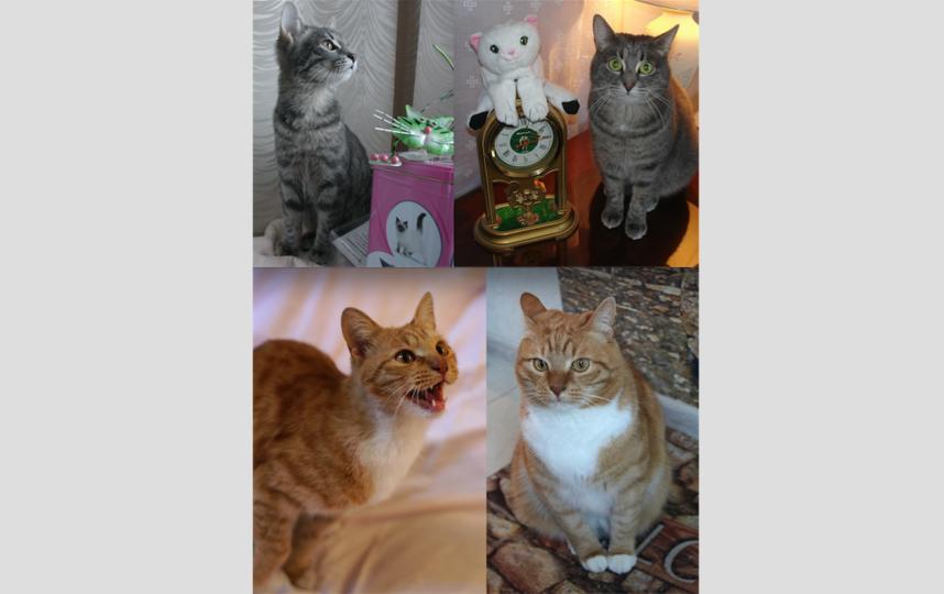 Кот Алексей и кошка Зося. Фото Филипсон Вера