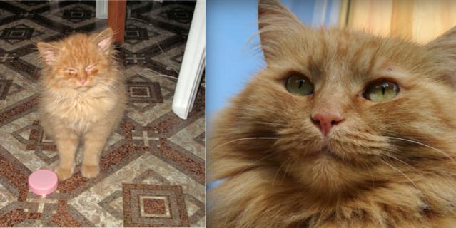 Подобрали эту кошку на улице – привезла нам ее одна знакомая из Московской области. Причем везла мальчика, а оказалась … девочка. Котенок был абсолютно дикий, с кучей болезней. Вот на 1-м фото ей около 2,5 месяцев. Тогда глазки совсем не открывались… Но к счастью, вылечили, вырастили и воспитали.