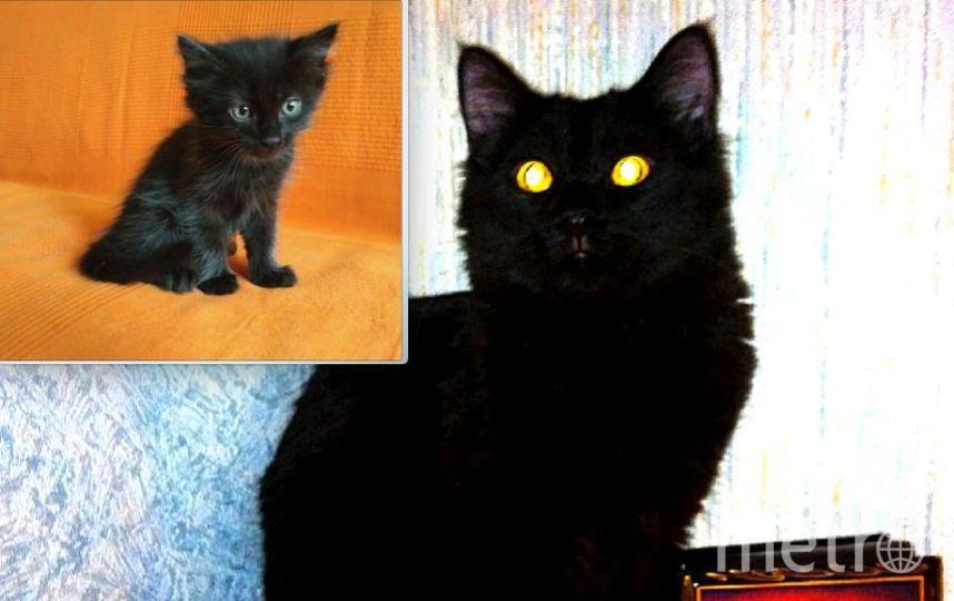 Любимый хулиган по имени Ёжик. Из приюта Котофеи . На первом фото около 2-х месяцев,на втором- полгода..