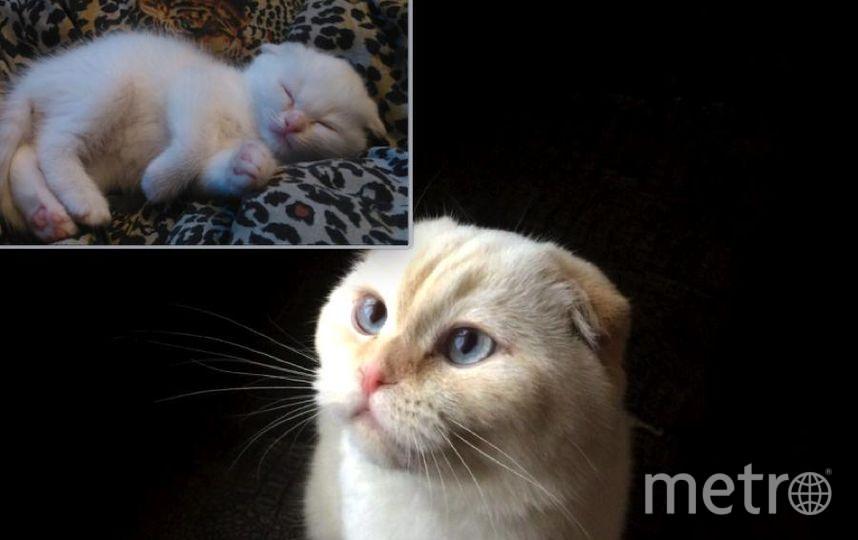 """Это наш Каспер! Нашёлся он не в капусте, а в букете цветов, который подарил мне мой будущий муж. С тех пор Каспер - """"белый и пушистый"""" стал любимцем всей семьи. Сейчас он уже взрослый кот, ему 3 года.."""