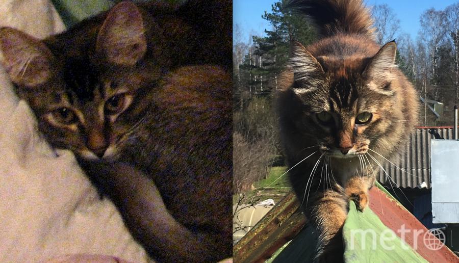 """На первом снимке изображена моя очаровательная кошка Мура, которой ещё месяц. По началу она очень боялась в квартире всего, но потом обвыкла. Она очень любит лазить по деревьям и по крышам. На второй фотографии ей 5 лет. Настоящая """"Юная скалолазка"""".. Фото Андрей"""