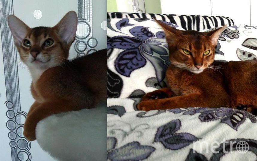 Знакомьтесь, это самый замечательный кот Ричи! На первом фото ему 3 месяца, а на втором - 1 год. Любит много кушать, играть и наблюдать за птичками! Фото Александра