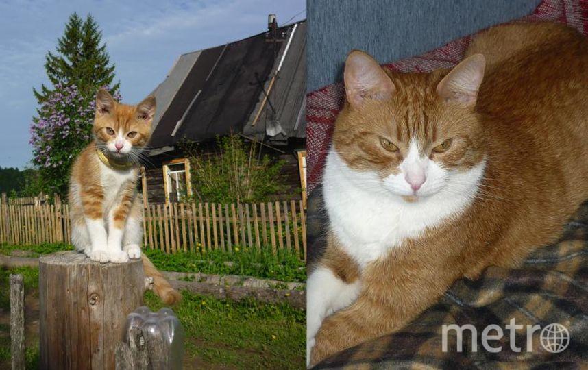 Наш любимец кот ТИТОШКА. На первом фото ему всего 2,5 месяца, его мне подарила сестренка. Сейчас котику 7 лет. Он очень любознательный, внимательный, любит поиграть, радуется твоему приходу, а мы еще больше его любим. Фото Светлана