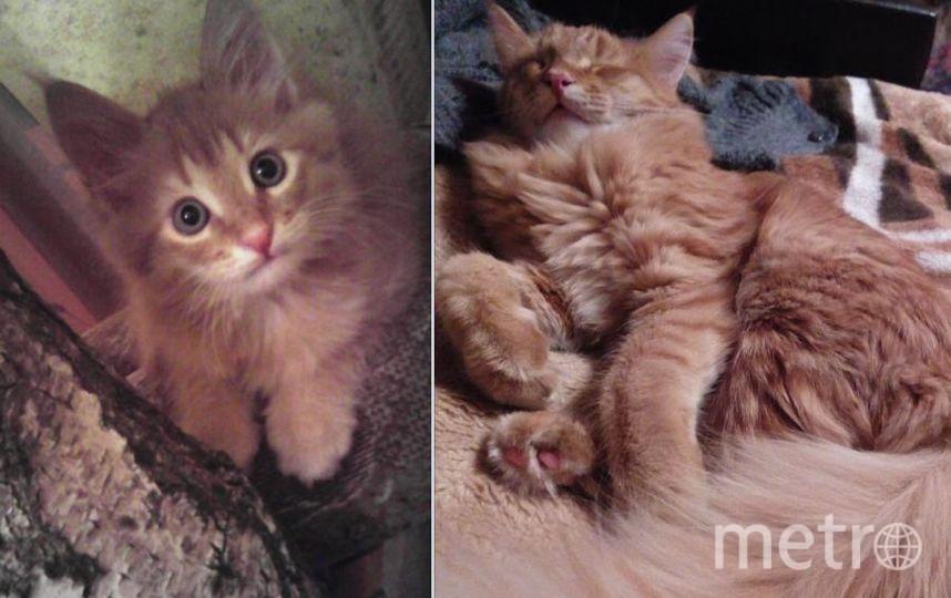 Это Василий,здесь ему 1 месяц и на другом снимке почти год.Наш кот отзывается только на имя Василий,на просто Вася или кис-кис презрительно отвернется.Любимое занятие спать на папином диване .Очень гордиться своим хвостом..