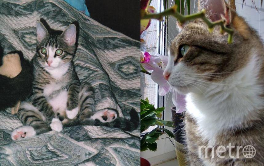 Филю мы взяли в добрые руки - бабушка раздавала котят на рынке и по счастливой случайности он остался последним - ждал нас! Необычайно умный, терпеливый и спокойный, любит играть и греться на солнышке. Живет с нами уже 11 лет. На фотографиях ему 5 месяцев и 10 лет.. Фото Анастасия