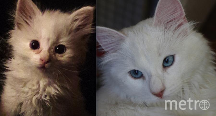 Котенка подобрал мой сын на помойке. Оказалась кошечка. Назвал ее Лилит, но я зову ее Лилия. На первых снимках котенку около 1 месяца, такой я ее увидела впервые. Сейчас ей около 9 месяцев. Очень умная, игривая, ласковая и разговорчивая... Очень любит причесываться, сидеть на задних лапах и играть с мышками.. Фото Наталия