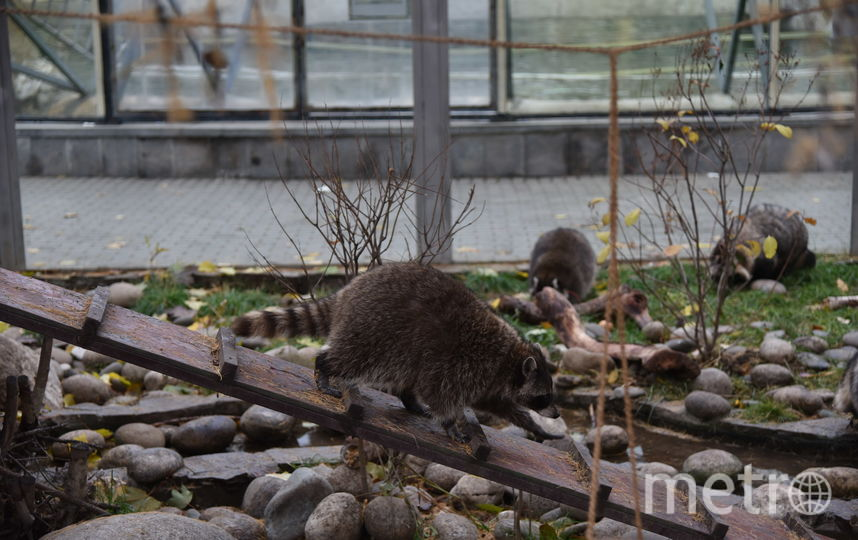Московский зоопарк снизил цены и изменил режим работы. Фото Василий Кузьмичёнок