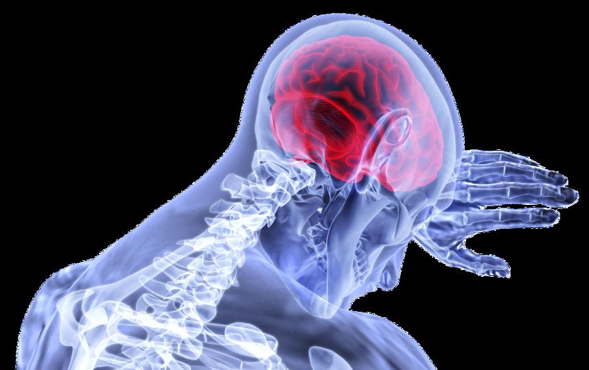 ЭНС периферийна и работает автономно от центральной нервной системы (ЦНС), состоящей из головного и спинного мозга. Фото Pixabay