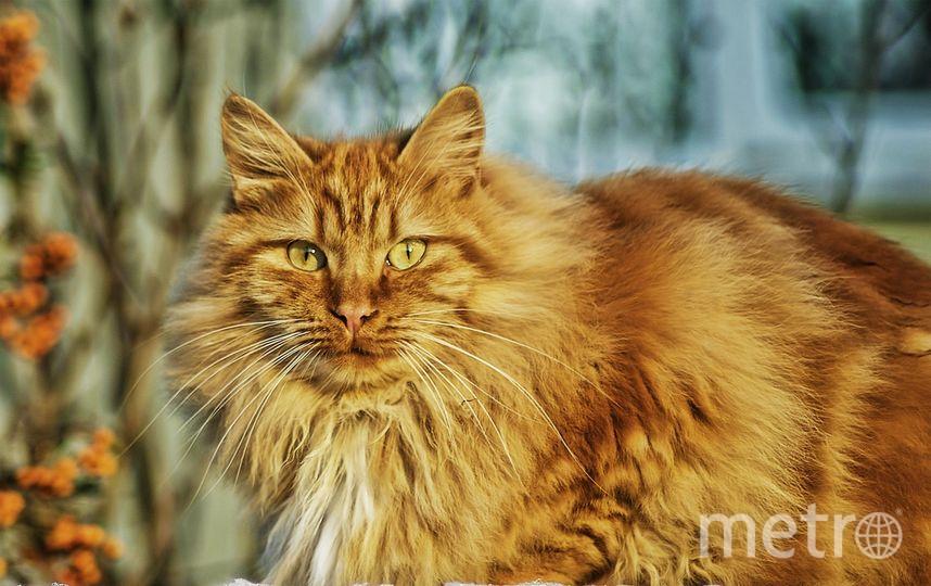 """Возбуждено уголовное дело по статье """"Жестокое обращение с животными"""". Фото Pixabay"""