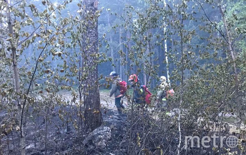 Фото тушения пожара в парке Монрепо предоставили в МЧС.