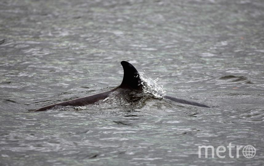 Дельфина спасти не удалось. Фото Getty