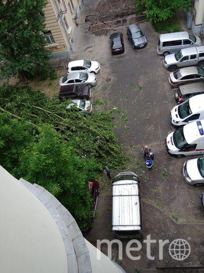 Деревья падают из-за сильного ветра в Петербурге. Фото vk.com