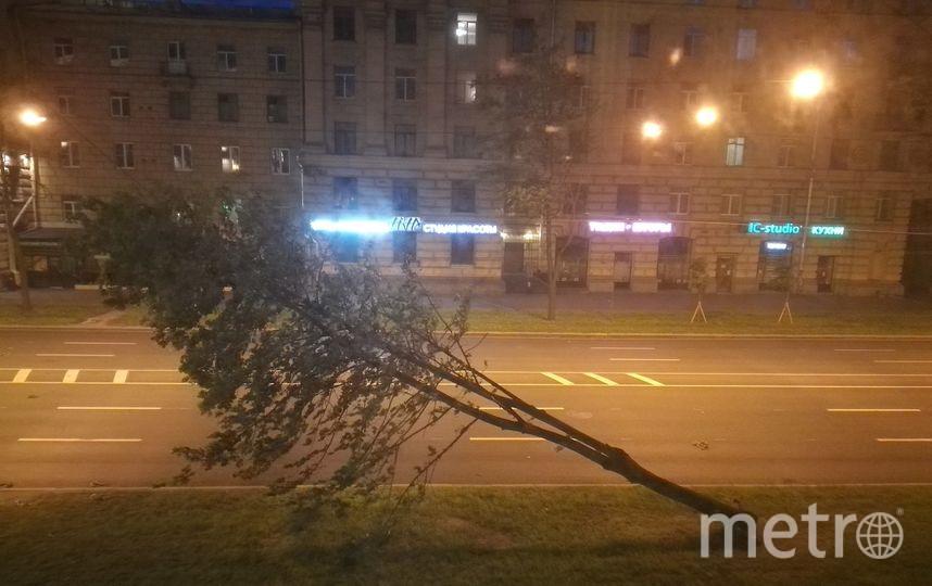Деревья падают из-за сильного ветра в Петербурге. Фото с пр.Стачек. Фото vk.com