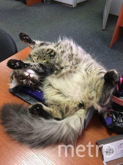 Наша всеобщая любимица - кошка по имени Мышка. Очень любит поспать, покушать и особенно попить у кого-нибудь из кружки.. Фото katya_kru